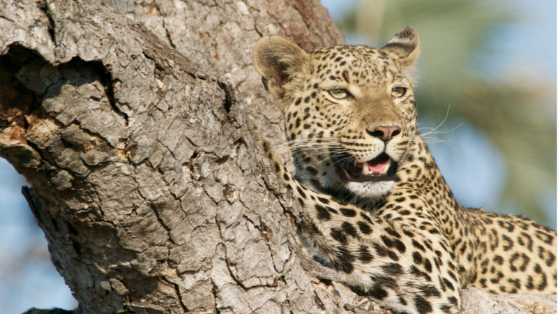 Gorumara National Park Safari