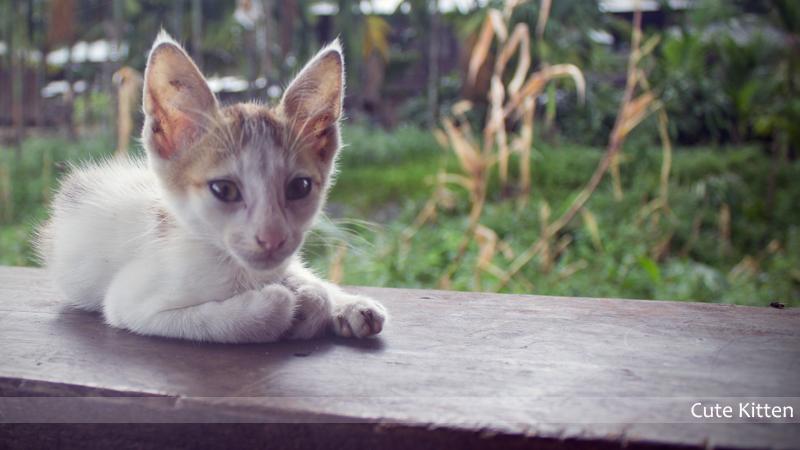 Kitten_SPT